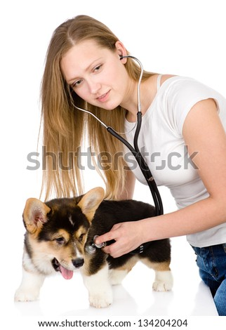 vet checking the heart rate of a adult Pembroke Welsh Corgi dog. looking at camera. isolated on white background