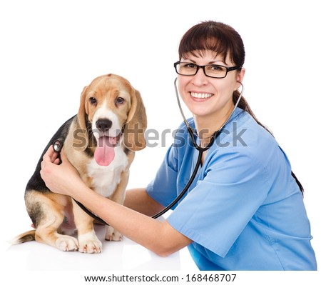vet checking the heart rate of a puppy. isolated on white background