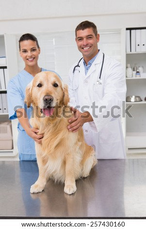 Vet coworker examining dog in medical office - stock photo