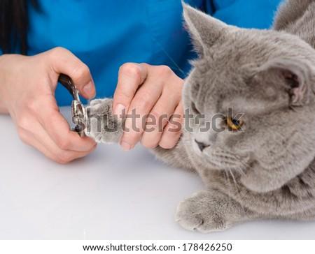 vet cutting cat toenails - stock photo