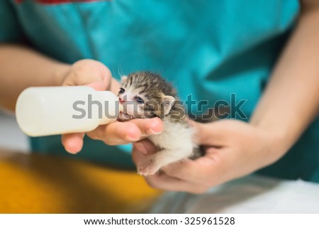 Vet doctor feeds milk through a pacifier to a young kitten. - stock photo