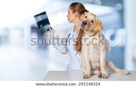 Vet, dog, veterinarian. - stock photo
