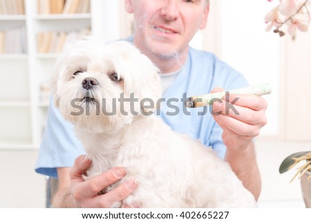 Vet doing moxa treatment on little dog