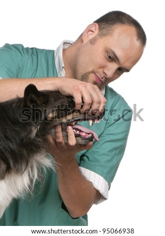 Vet examining a Border Collie in front of white background - stock photo