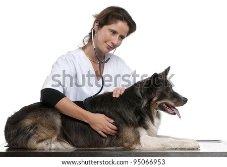Vet examining a Border Collie with a stethoscope in front of white background