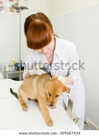 Vet examining a dog's ear with an otoscope - stock photo