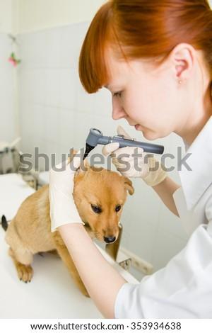 Vet examining a dog's ear with an otoscope - stock photo