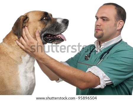 Vet examining a mixed-breed dog in front of white background - stock photo