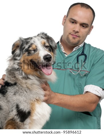 Vet examining a winking Australian Shepherd in front of white background
