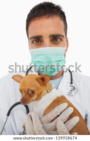Vet holding chihuahua and wearing green protective mask on white background