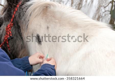 Vet injecting a horse in the neck - stock photo