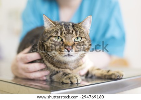 Vet Pet - stock photo