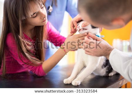 Vet specialist at work checking cat's mouth and teeth in vet clinic - stock photo