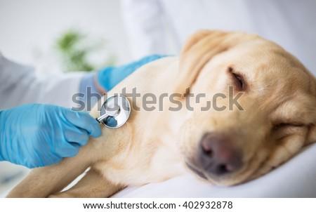 Vet specialist examination sick dog - stock photo