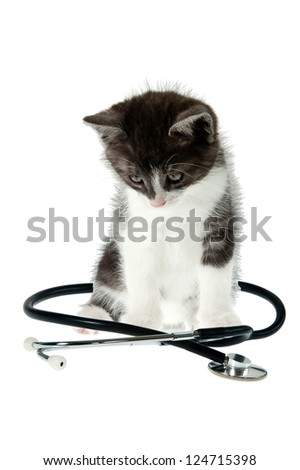 Vet visit concept. Little kitty sitting, Stethoscope is around cat. Isolated object at white background - stock photo