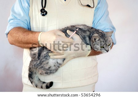 Vet with a cat