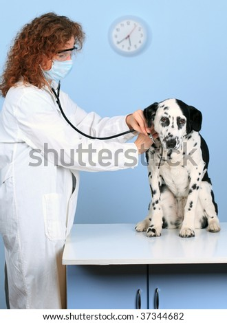 Vet With Dog In Surgery
