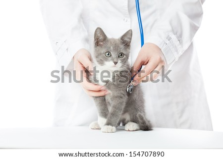 Vet with stethoscope and kitten. Isolated on white - stock photo