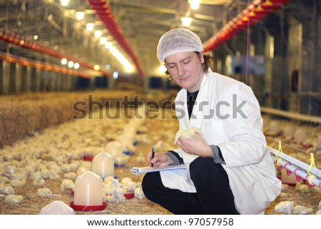 Vet working on chicken farm - stock photo