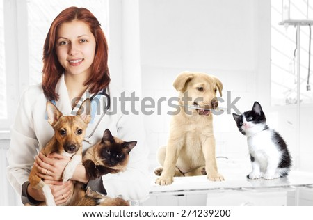 veterinarian and dog and cat at the clinic