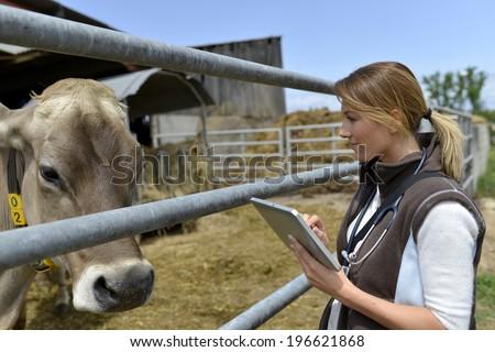 Veterinarian checking on herd's health in barn - stock photo