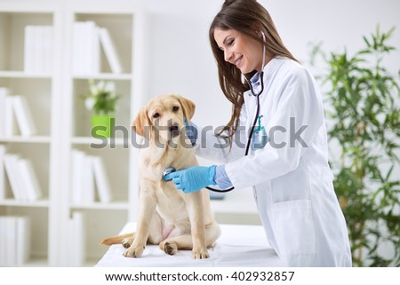 Veterinarian doctor and a labrador puppy at vet ambulance