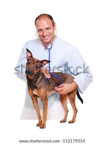 Veterinarian doctor examining the  dog on white background - stock photo