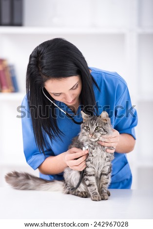 Veterinarian doctor is making a check up of a cute beautiful cat. - stock photo