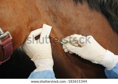 Veterinarian doctor with horse - intravenous injections - stock photo