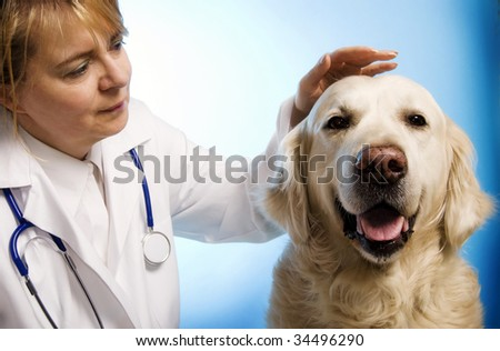 veterinarian doctor woman taking care of a golden retriever dog