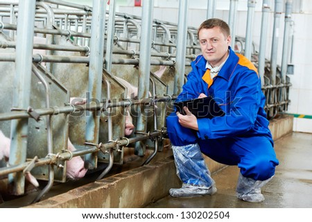Veterinarian doctor worker at agriculture reproduction farm or pork plant inspecting pig - stock photo