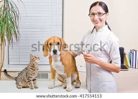 Veterinarian, dog and curious cat