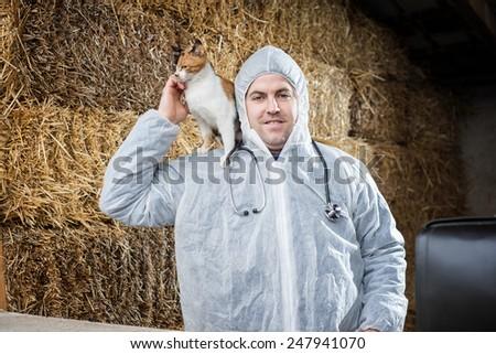 Veterinarian examines cat. - stock photo