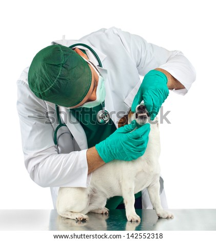 Veterinarian examines the dog's teeth on white background - stock photo