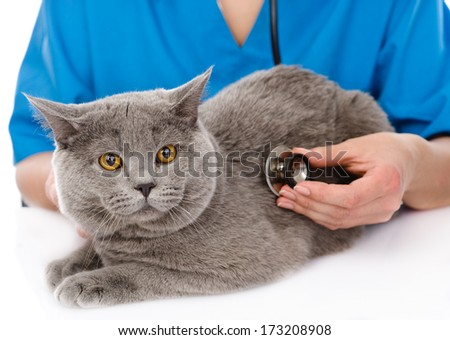 veterinarian examining a cat. isolated on white background - stock photo
