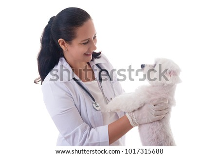 veterinarian examining a cute maltese dog, isolated over white background