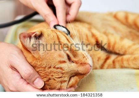 Veterinarian examining a kitten - stock photo