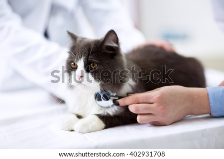 Veterinarian examining a kitten close up - stock photo