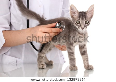 Veterinarian examining a kitten isolated on white - stock photo
