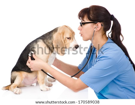 veterinarian examining a puppy dog. isolated on white background - stock photo