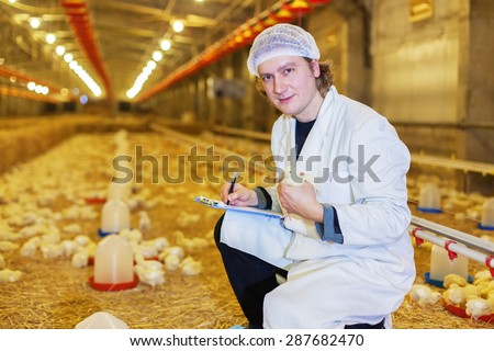 Veterinarian examining chicken inside of chicken farm, looking at camera.Shallow doff, copy space - stock photo