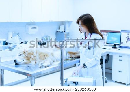 veterinarian examining cute golden retriever at hospital take with blue filter - stock photo