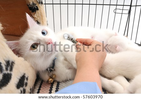 Veterinarian examining cute white cat with stethoscope, isolated on white - stock photo