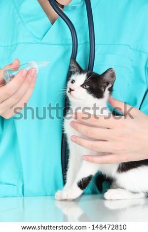 Veterinarian examining kitten close up - stock photo