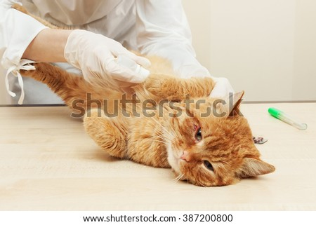 Veterinarian examining teeth of a cat while doing checkup at clinic. - stock photo