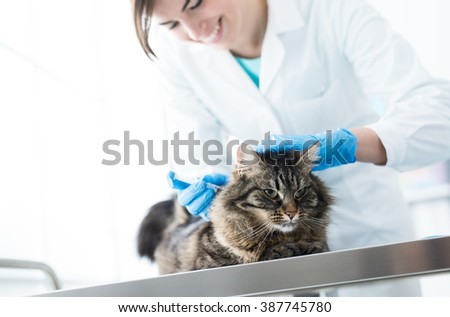 Veterinarian giving an injection to a cat on a surgical table, vaccination and prevention concept - stock photo