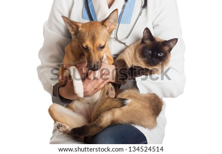veterinarian holding a cat and a puppy on a white background isolated - stock photo