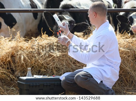 veterinarian holding a syringe on a cow farm - stock photo