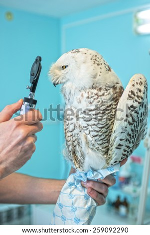 veterinarian holding and checkup owl - stock photo
