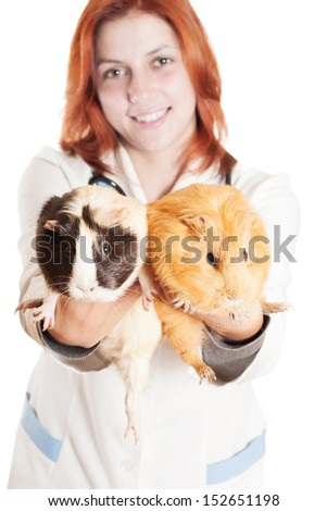 veterinarian holding on outstretched arms guinea pig on a white background isolated - stock photo